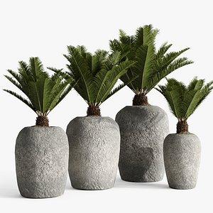 3D model planter palm sago