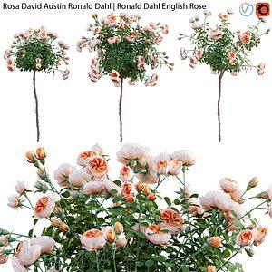 3D Rosa David Austin Ronald Dahl - rose 02