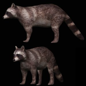 fully rigged brown raccoon 3D model