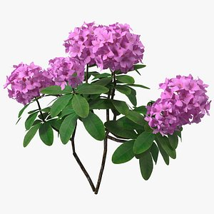 3D rhododendron branch tree model