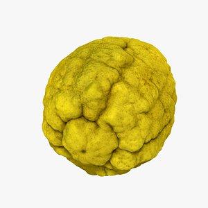 Citron Citrus medica - Extreme Definition 3D Scanned 3D model