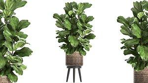 plants interior rattan basket 3D model