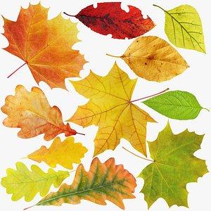 3D Leaves Collection V1