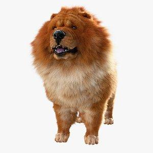 Chow Chow Dog 3D model
