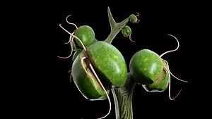 alien plant model