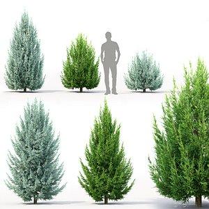 3D thuja coniferous