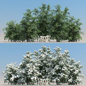 summer ligustrum tree leaf 3D model