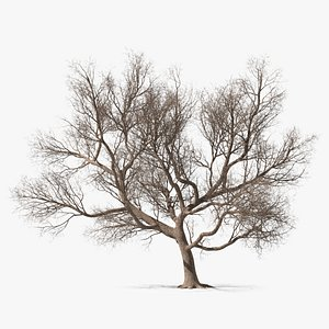 Big Bare Tree 3D model