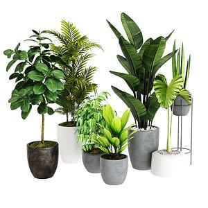 tree plant bush 3D