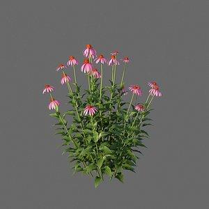 XfrogPlants Purple Coneflower - Echinacea Purpurea 3D