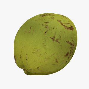 3D model Green Coconut - Extreme Definition 3D Scanned