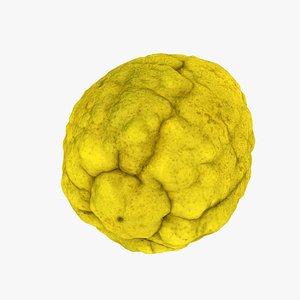 3D model Citron Citrus medica - Real-Time 3D Scanned