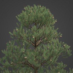 2021 PBR Austrian Black Pine Collection - Pinus Nigra 3D model