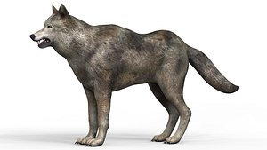 Wolf With PBR Textures 3D model