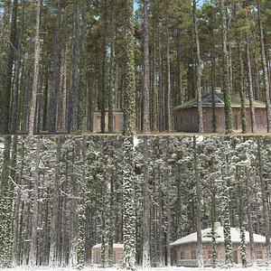 3D pine trees