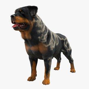 3D dog rottweiler