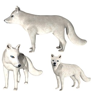 3D Rigged low poly Arctic Fox