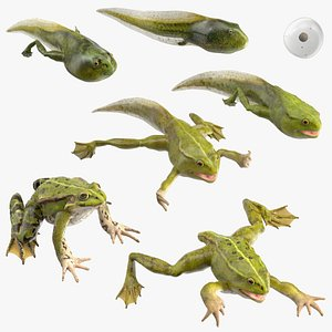 Frog Life Cycle Stages Rigged for Modo 3D model