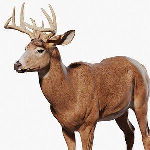 3D White tailed Deer  Virginia Deer
