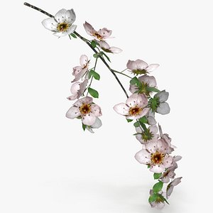 cherry blossom branch model
