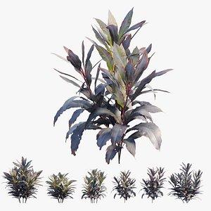Cordyline Fruticosa plant set 09 3D