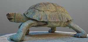 turtle animal tortoise 3D model