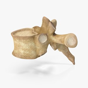 3D anatomy bone model