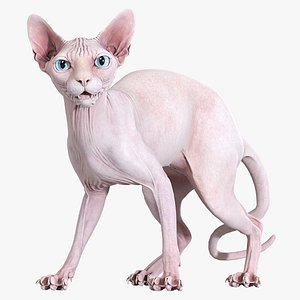 sphynx cat standing 3D