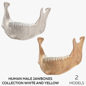 Human Male Jawbones Collection White and Yellow - 2 models 3D