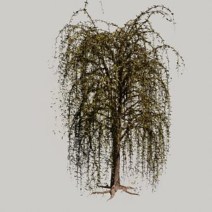 The Willow Tree high poly 3D