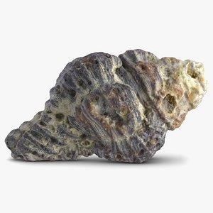 old sea shell 2 max