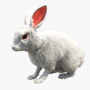 3D White Rabbit