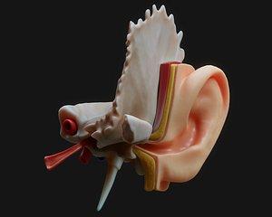 anatomy ear 3D