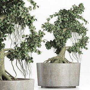 mini bonsai plant tree 3D model