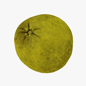 3D Pomelo Citrus maxima - Real-Time 3D Scanned model