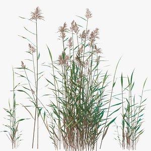 nature plants grass 3D model