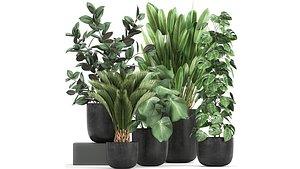 plants pot flowerpots model