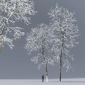 3D tree ash winter