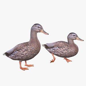 3D Mallard Duck Female model