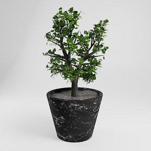 3D tree potty