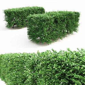 3D buxus hedge model