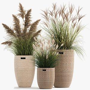 3D Ornamental plants in rattan baskets 1024 model