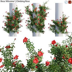Rosa Altissimo - Rose flower 02 3D model