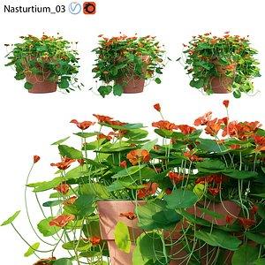 Nasturtium 03 3D model
