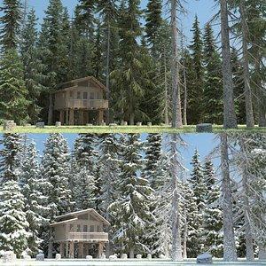 20 winter picea albea 3d model