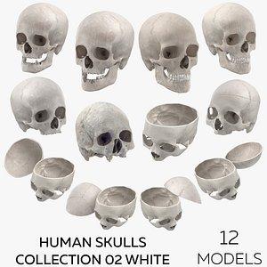 3D Human Skulls Collection 02 White - 12 models model