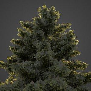 tree nature conifer 3D model