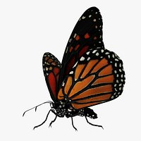 Beautiful Butterfly  Rigged and Animated