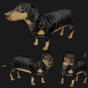 3D realistic rigged dachshund model