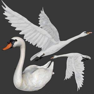 fully rigged two different versions of Swan 3D model